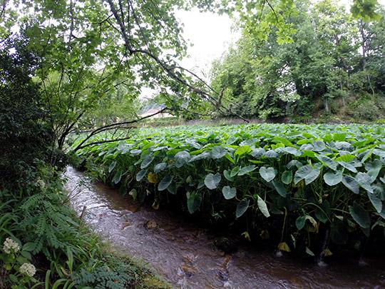 Jardín botánico Terra Nostra, en Furnas.